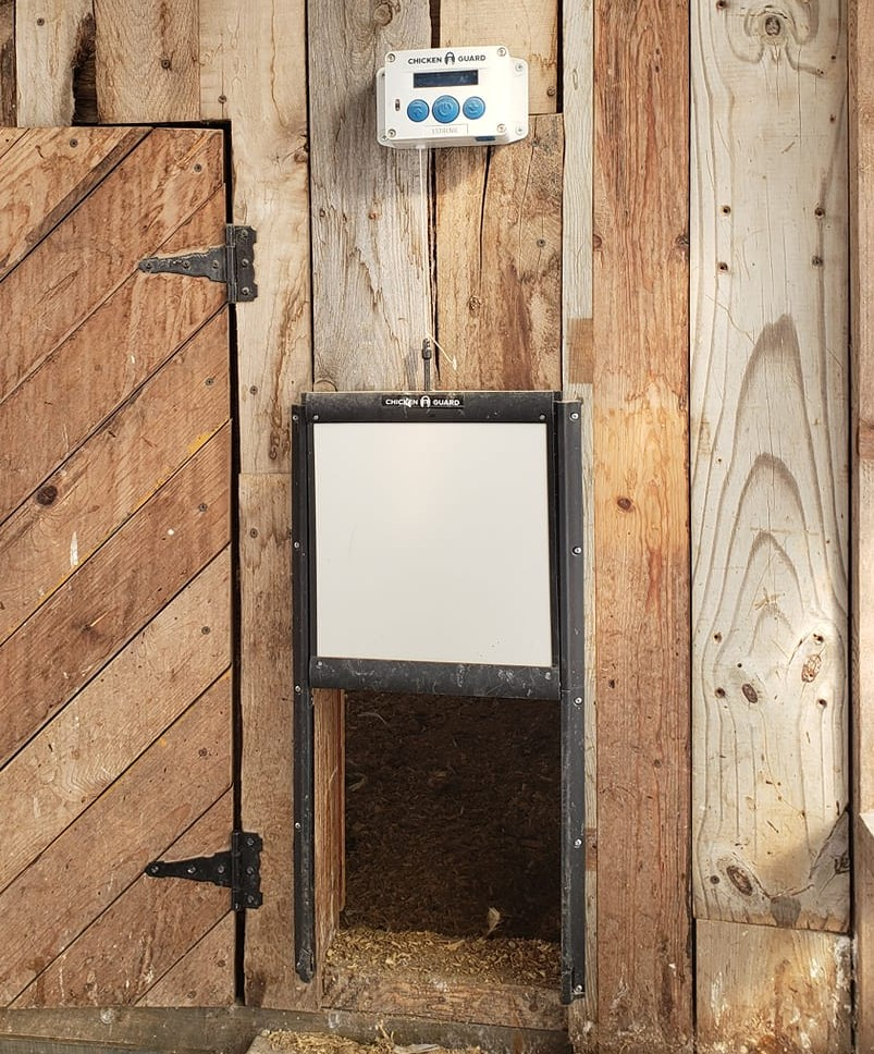 Do automatic chicken doors work? An In-depth look at automated coop doors